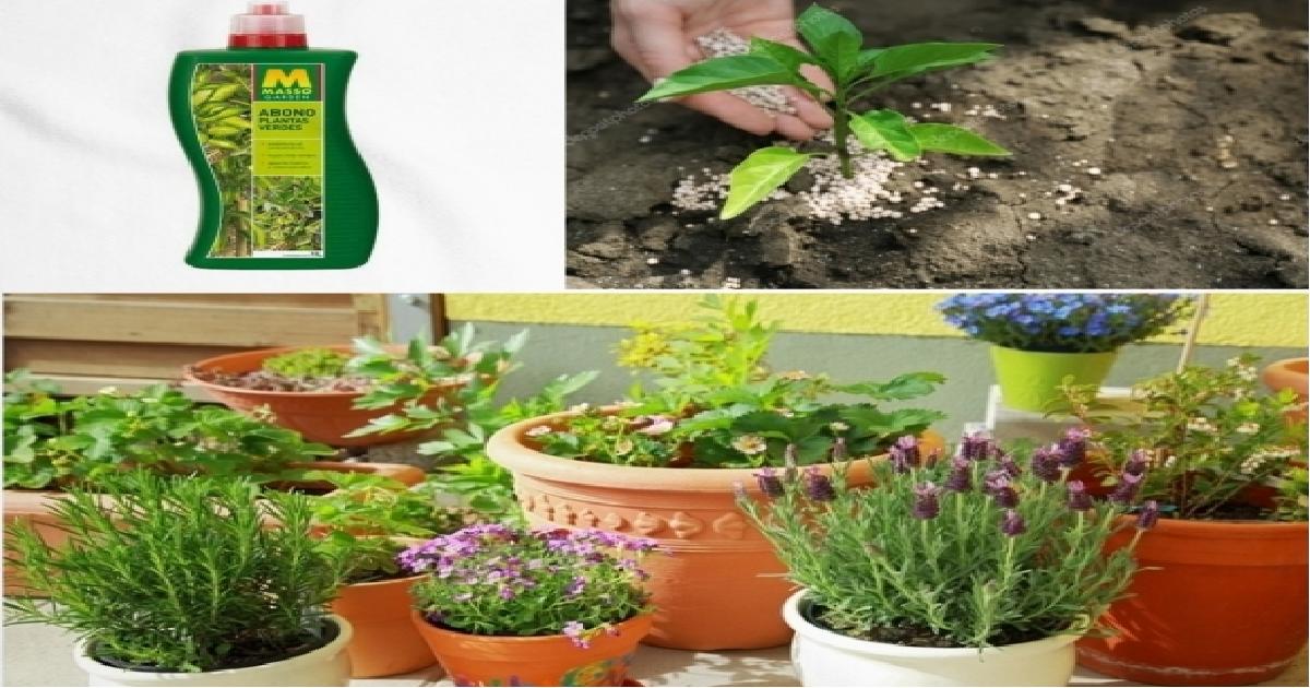 Vitaminas para Plantas de Interior
