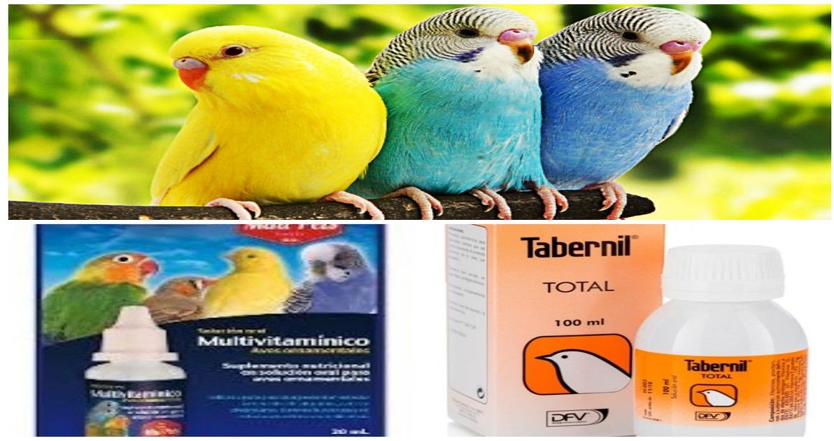 vitaminas para aves o pájaros