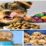 Vitaminas Para Cachorros Secretos Para Que Sea Sano y Fuerte