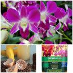 Vitaminas Para Orquídeas Fertilizantes, Trasplantes y Cuidados