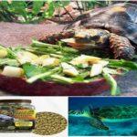Vitaminas Para Tortugas de Agua y Tierra, Suplementos y Mas