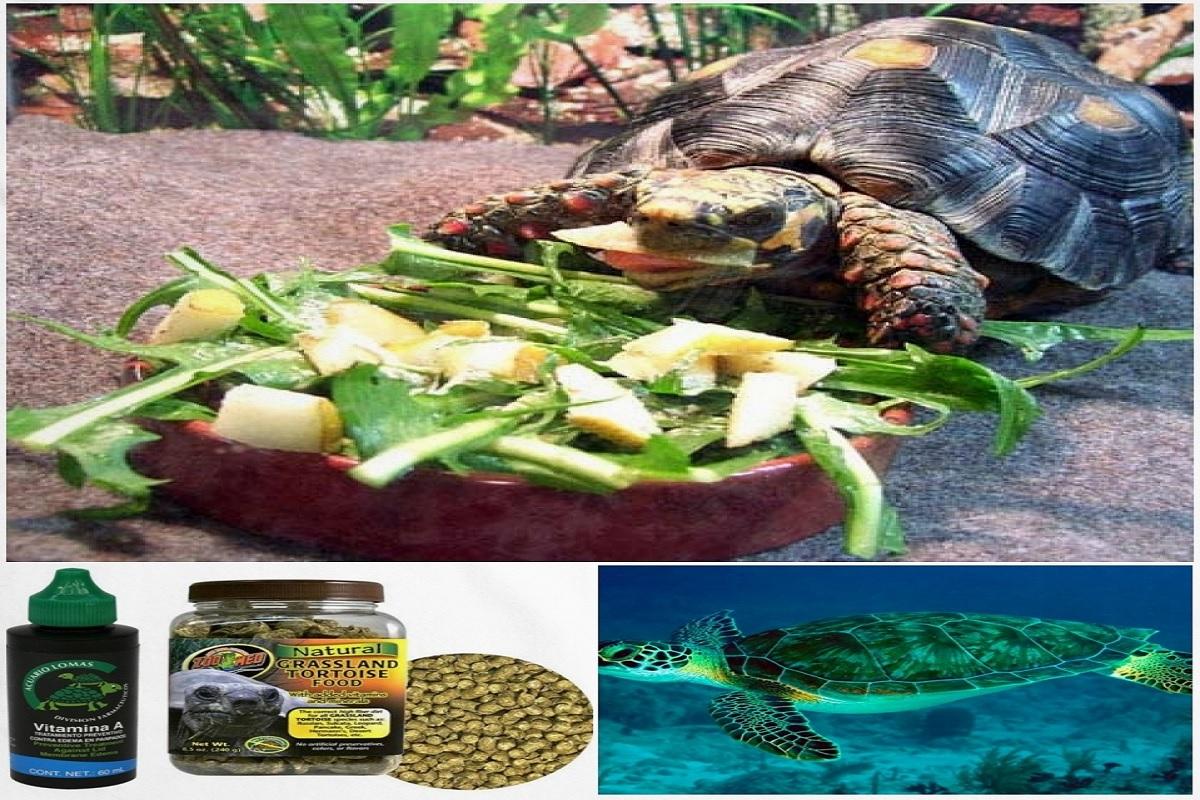 Vitaminas Para Tortugas de Agua y Tierra